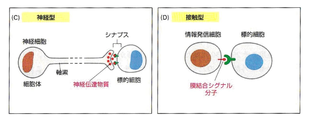 細胞の情報伝達機構